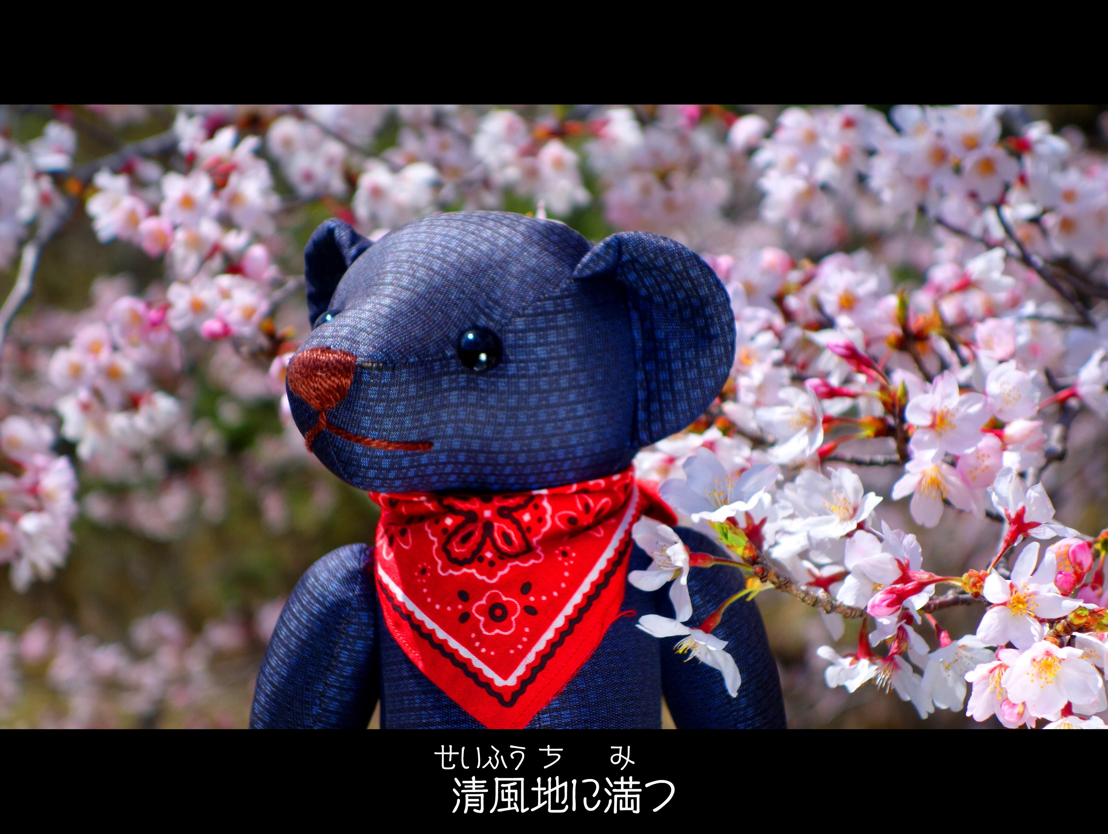 【桜の和歌】古今和歌集から学ぶ桜の楽しみ方12選